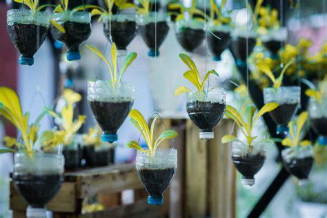 fruits vegetables  grow   hanging garden