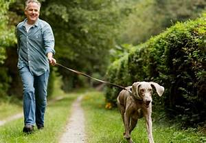walking the dog a post by jim crosspoint With the dog walking company