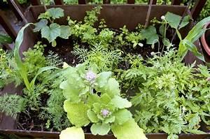 Garten Im Mai : der yok garten im mai ye olde kitchen food und gartenblog ~ Markanthonyermac.com Haus und Dekorationen