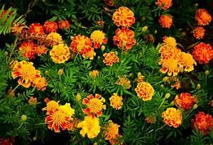Companion Plants To Benefit Your Survival Garden
