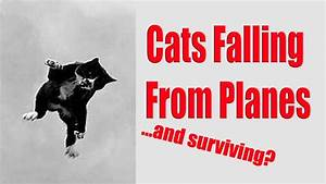 Cats Can Fall From Planes and Survive?! - YouTube
