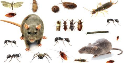Voici Comment Repousser Les Insectes De Chez Soi Sainement