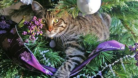 repel cat christmas tree 26 cats in on and trees mnn nature network