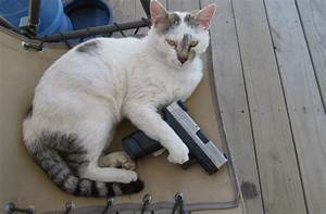 Tag For Gun cat photos hd : Funny Fat Cats With Guns Hd ...
