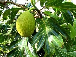 Arbre A Fruit : troncs peu communs ~ Melissatoandfro.com Idées de Décoration