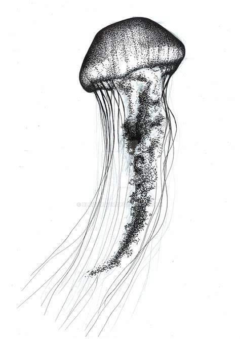 Jellyfish Drawing By Blxckmoon On Deviantart