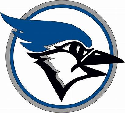 Jay Clever Bluejay Jays Clip Clipart Sports