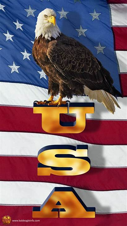 Eagle Bald Flag American Patriotic Background Wallpapers