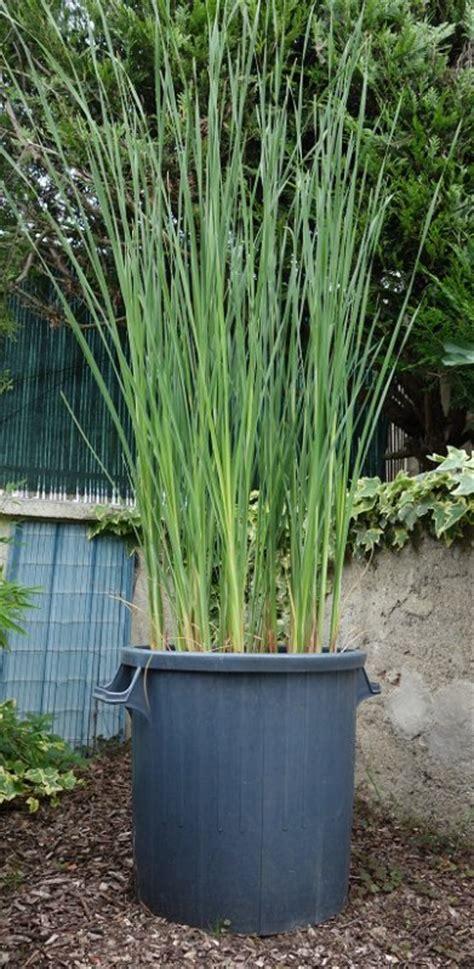 plantes aquatiques en pot de chezdidier