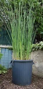 Grand Pot Plante : plantes aquatiques en pot blog de chezdidier ~ Premium-room.com Idées de Décoration