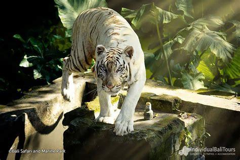 bali safari marine park gianyar  animal zoo journey