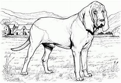 Coloring Dog Realistic Pages Printable Animal Colouring