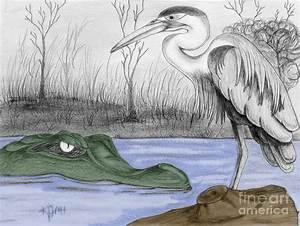 Image Gallery swamp drawings