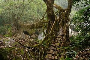 Cherrapunji's Root Bridges