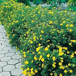 Bodendecker Gelb Blühend : bodendecker gelb bl hend ~ Frokenaadalensverden.com Haus und Dekorationen