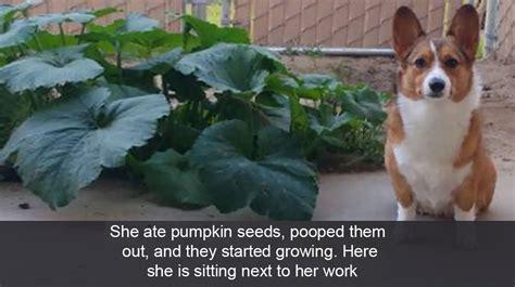rank   funniest dog snapchats  dog people