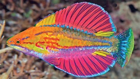amazing  fish species discovered   oceana