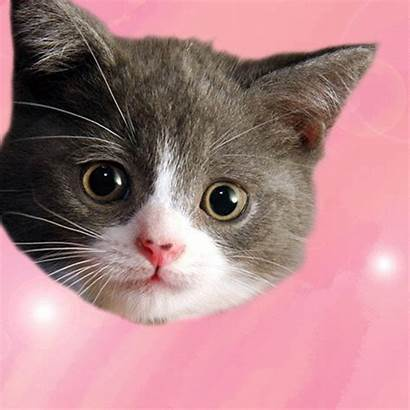 Kitten Valentine Gifs February Asking Lastly Tried