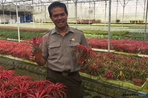 ekspor tanaman hias melonjak bidik pasar asia eropa