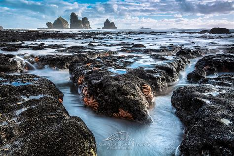 West Coast Starfish New Zealand Kea Photography
