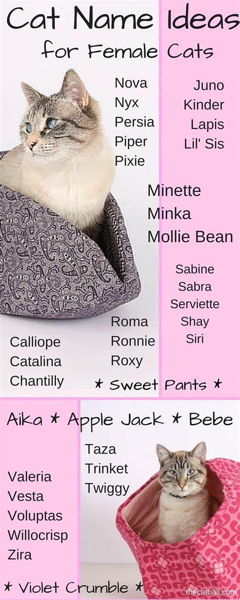 cat  ideas  female cats cat infographics memes