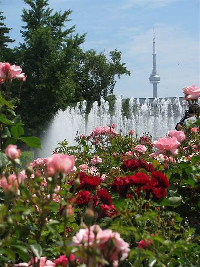 Garden Rose Roses Toronto North Canadian Society