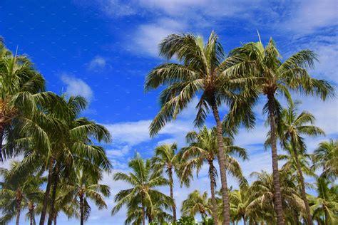 palm trees  blue sky hawaii high quality nature
