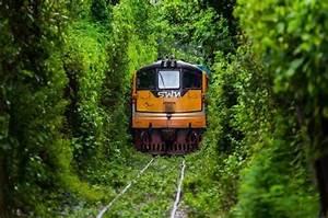 Unseen  4 Thailand U0026 39 S  U0026quot Tunnel Of Love U0026quot  Railway