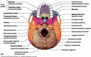 Nurs 210 Study Guide  2013-14 Bruggeman