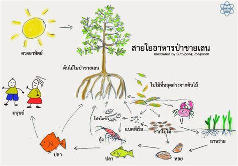 ระบบนิเวศ ม.3 - Scribd Thai