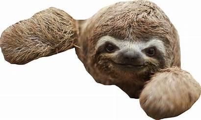 Sloth Transparent Clip Clipart Dlf Pt Resolution