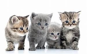 Weißer Wurm Katze : hintergrundbilder k tzchen katze 4 blick tiere wei er hintergrund ~ Markanthonyermac.com Haus und Dekorationen