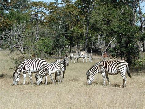 Wildlife of Angola Wikipedia