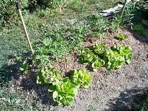 Creation Potager Surélevé : impressionnant jardin potager sabakunohana ~ Premium-room.com Idées de Décoration