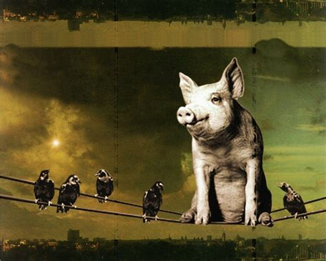 Animals Pink Floyd Wallpaper - pink floyd animals wallpapers wallpaper cave