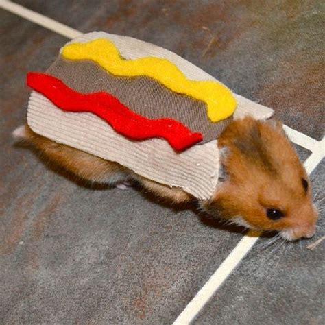 hamster hotdog pet halloween costumes  la