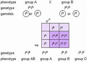 132 Genetic Diagrams