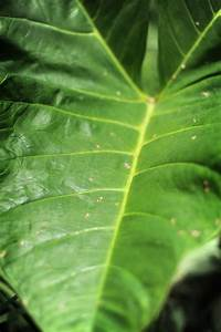 Adventures In Ghana  Important Plants Of Ghana