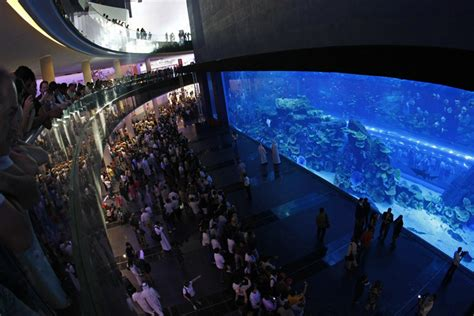 the dubai mall aquarium dubai aquarium underwater zoo awarded certificate of excellence by world s largest travel