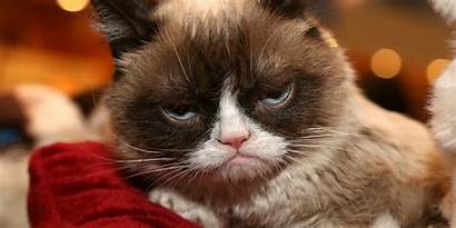 Grumpy Cat Meme Dead Rip Games Died