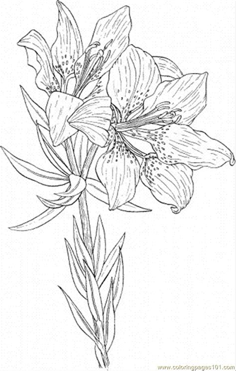 lily  coloring page  flowers coloring pages