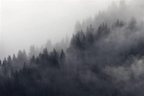misty forest gray wall mural photo wallpaper fog