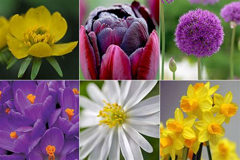 Tips Planting Fall Bulbs by Fall Bulb Planting Tips For Color Landsburg