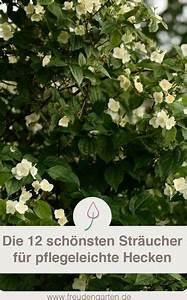 Blühende Hecken Sträucher : pflegeleichte hecke garten pflanzen str ucher garten ~ Watch28wear.com Haus und Dekorationen