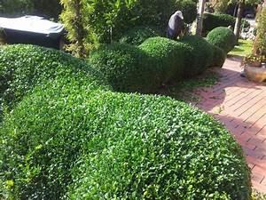Buchsbaum Kugel Schneiden : 25 b sta id erna om buchsbaum schneiden p pinterest ~ Lizthompson.info Haus und Dekorationen