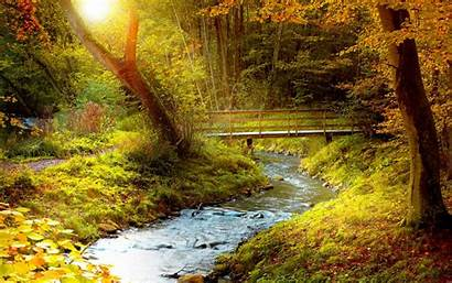 Stream Autumn Wallpapers Forest Desktop Backgrounds Background