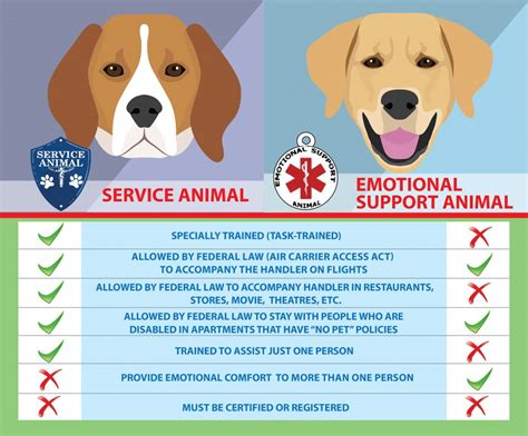 Service Dogs Vs Emotional Support Animals  Healthy Paws