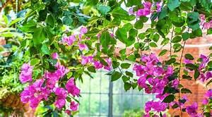 Pergola Pour Plante Grimpante : les 19 meilleures images du tableau plantes grimpantes sur ~ Premium-room.com Idées de Décoration