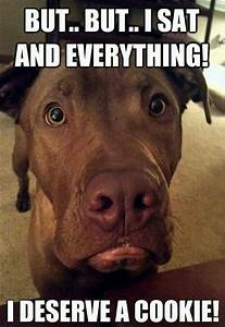 Funny Dog Memes - The Ultimate Collection - Dog Training ...