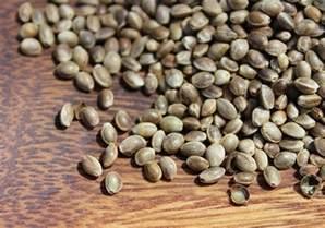 Shelled Hemp Seeds Benefits